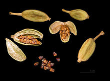 220px-Elettaria_cardamomum_Capsules_and_seeds